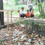 Monyet liar penggigit bocah di Jasinga Bogor yang ditangkap petugas (ist)