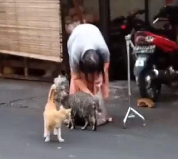 Nenek diikuti kucing di Pasar Karang Anyar