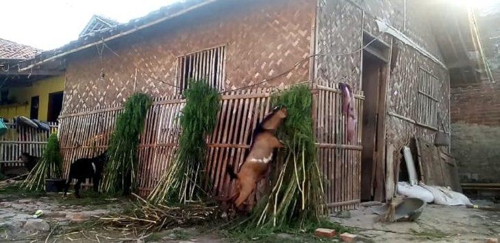 kediaman 2 janda di Karawang./Foto: Ega
