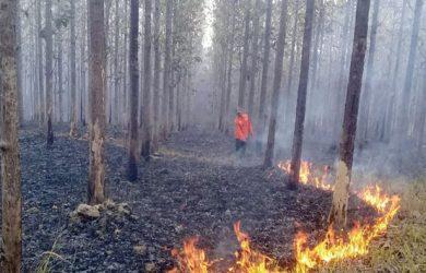 Kebakaran-Hutan-di-Jampangtengah