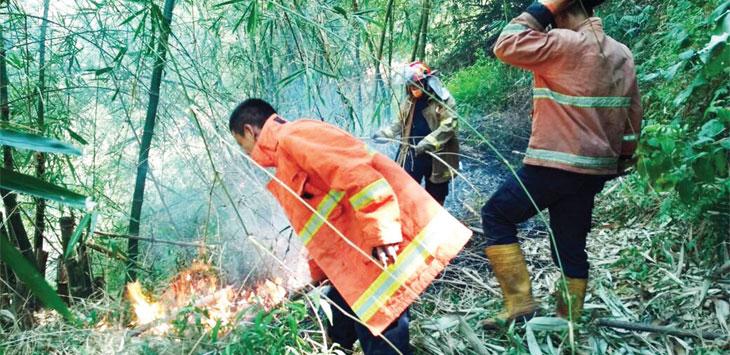 Pemadam kebakaran memadamkan api yang membakar lahan hutan bambu di Desa Citalang, Kabupaten Purwakarta.