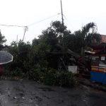 Pohon tumbang di Kebon Pedes Tanah Sareal Bogor (ist)