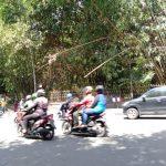 Bambu yang menjulur ke jalan dari Istana Bogor yang bisa membahayakan pengguna jalan (adi)