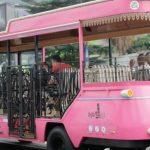 Bus-wisata-Pink-di-Kota-Sukabumi