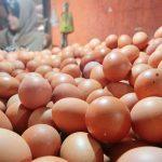 Pedagang-Telur-di-Depok