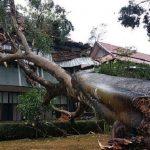 Pohon Beringin Timpa Kantor Wakil Bupati Garut