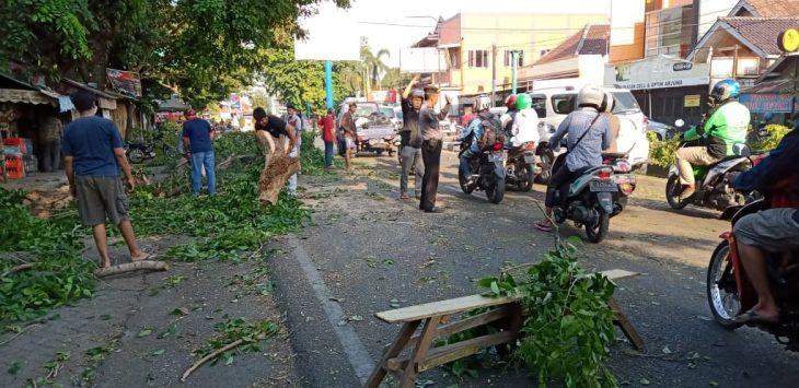 Petugas BPBD dibantu masyarakat membersihkan sisa-sisa pohon tumbang. Dede