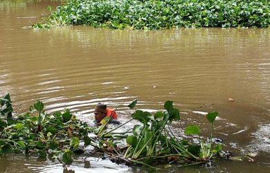 Pembersihan Eceng Gondok Di Sungai Cimanuk Garut