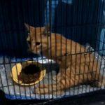 Kucing korban tabrak lari di Karawang