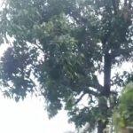 Suasana langit Kota Bogor saat hujan