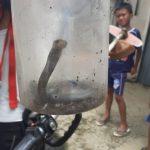 Ular kobra yang ditemukan warga di Kayumanis Tanah Sareal Kota Bogor (ist)