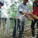Warga memindahkan puluhan anak kobra di Ciamis