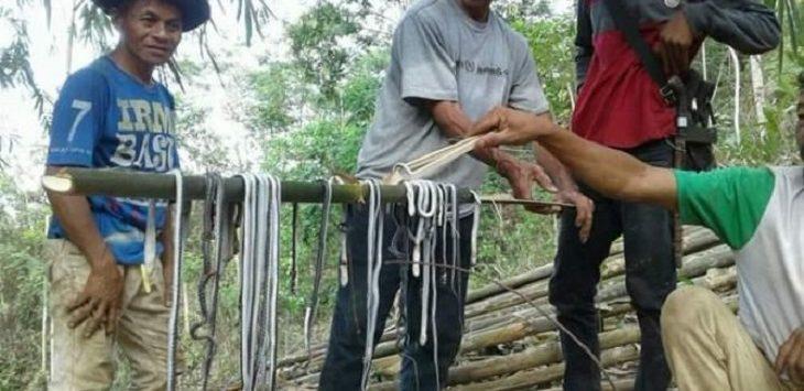 Warga memindahkan puluhan anak kobra di Ciamis./Foto: Rmol