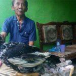 Ayam Berkaki 4 dari Cikarang, Pemilik Ingin Jual Rp5 Miliar