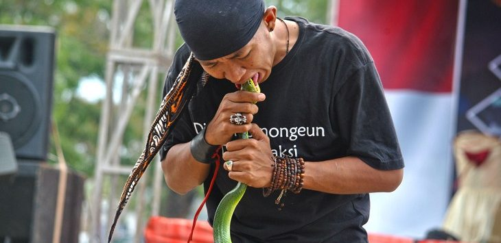 Aksi Dede Juliansyah bersama ular kesayangannya,/Foto: Istimewa