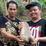 Penemuan fosil gajah purba di Indramayu