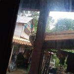 Monyet liar di Bogor