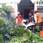 Motor yang tertimbun pohon tumbang di Perumahan Kebun Raya Pamoyanan (ist)
