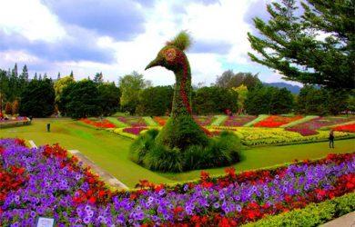 Taman Bunga Nusantara Sudah Buka Atau Belum