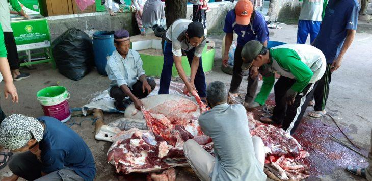 Para panitia pemotong hewan kurban di Ponpes Al-Muhajirin tengah memotong-motong daging sapi yang kemudian dagingnya akan di sebar kepada masyarakat sekitar.