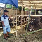 Penjual hewan kurban di Karawang