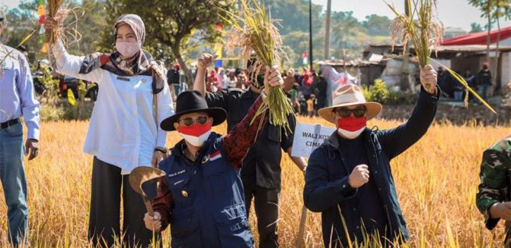 Walikota Cimahi Ajay Muhyammad Periatna saat melakukan giat panen raya uji coba Jamu Organik Bio Gro di Ciseupan, Cibeber, Kota Cimahi, Rabu (26/8/2020). Ist