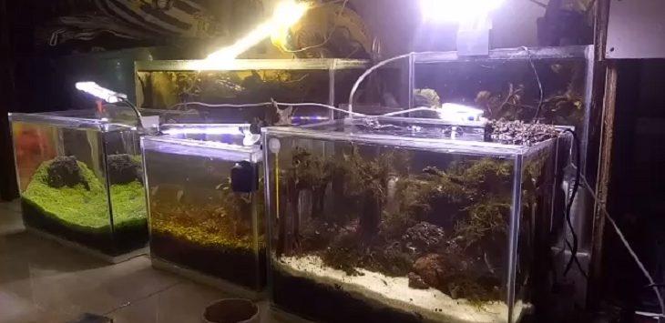 Akuarium Aquascape./Foto: Ega