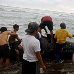 Hiu paus dipotong potong nelayan di Cianjur (ist)
