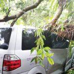 Pohon-tumbang-di-Kota-Sukabumi