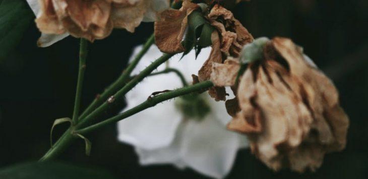 Bunga layu (foto net)