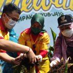 Istri Walikota Bogor ikut panen jahe merah (adi)
