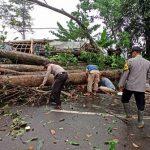 Pohon tumbang di Sukabumi