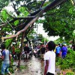 Pohon tumbang di Karawang
