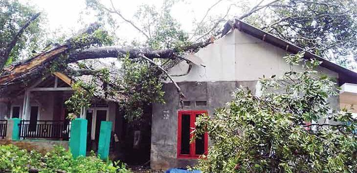 Sejumlah pohon di Kota dan Kabupaten Sukabumi bertumbangan akibat angin kencang yang melanda wilayah Sukabumi