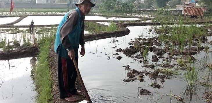 Seorang petani melakukan aktivitasnya di kawasan jalan Encep Kartawirya.