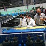 Raiser Ikan Hias Cibinong