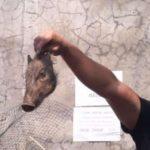 Dugaan babi ngepet di Depok