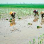 produksi petani bekasi