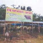 penjual-hewan-kurban